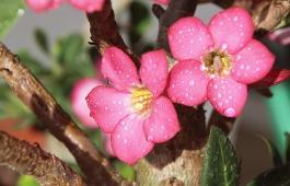 flower-858312_640